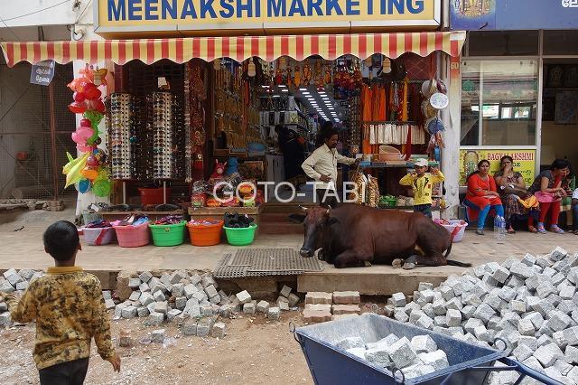 牛が居座る参道脇