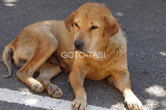 ポンディシェリ犬