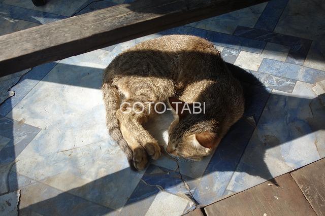 カレーミョ猫