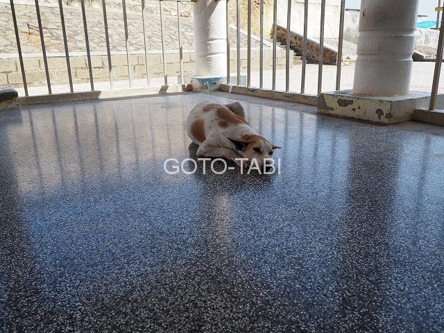 ガンジー記念館で寝る犬
